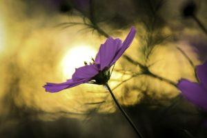 flowers-1441375_960_720